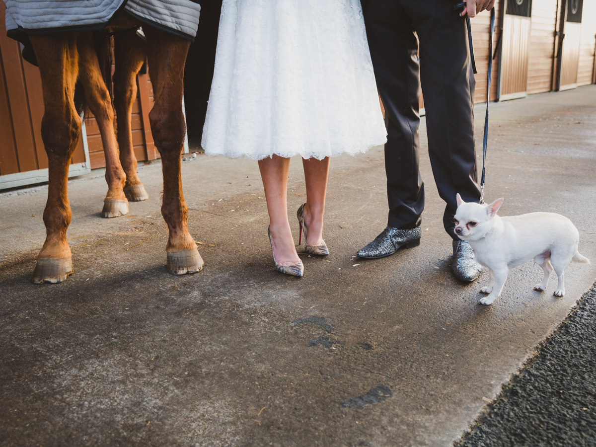 Wedding at Ingliston in Bishopton. Legs of a horse, bride, bridegroom and a chihuahua dog.